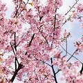 Photos: Spring-9716
