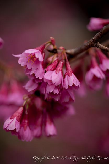 Photos: Spring-9720