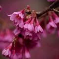 Spring-9720