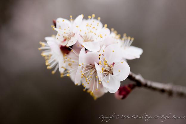 Photos: Spring-9725