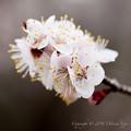 Spring-9725