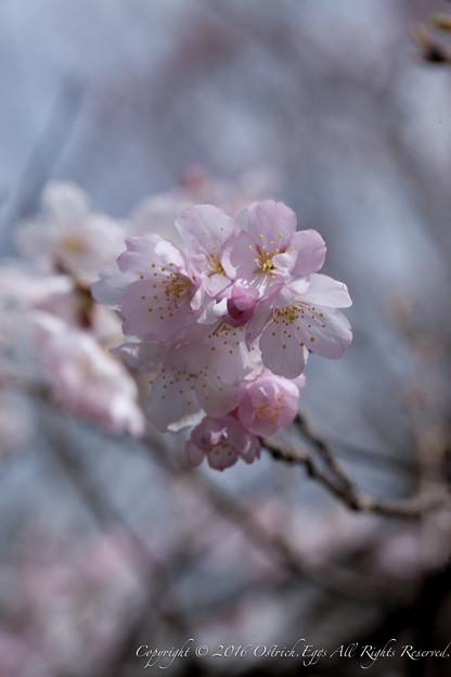 Photos: Spring-9752