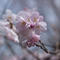 Spring-9752