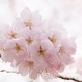 Spring-9755