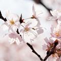 Spring-9760