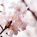 Photos: Spring-9762