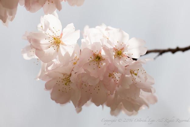Photos: Spring-9768
