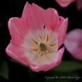 Photos: Spring-9560