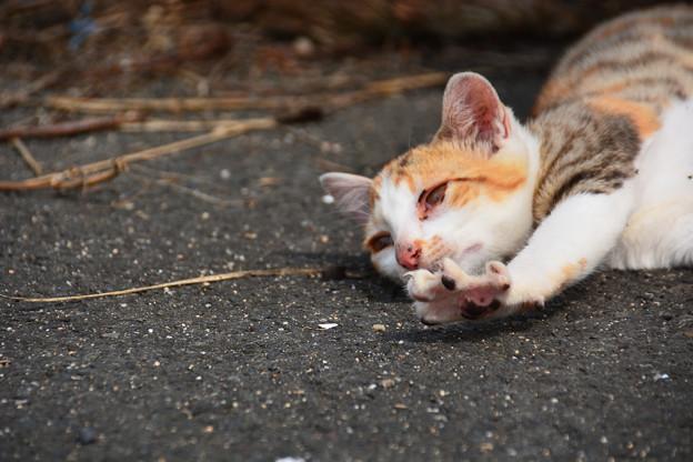 西浜の猫12