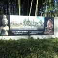 写真: 涅槃会が終わってから、姫路の書写山の麓へ。アンコールワットへのみ...