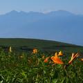 Photos: 八ヶ岳とニッコウキスゲ