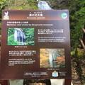 Photos: 140513-131東北ツーリング・湯の又大滝