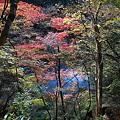 Photos: 101119-107紅葉と多摩川