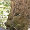 101119-181弁慶の腕ぬき岩