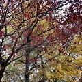「哲学の小径」美しい紅葉・A