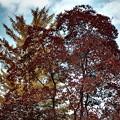 「哲学の小径」美しい紅葉・B