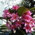 写真: 沿道の花。1