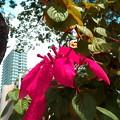 写真: 沿道の花。2