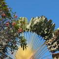 写真: 南国の空とダイナミックな庭木