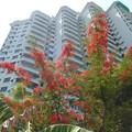 南国の赤い花。2