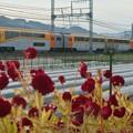Photos: 20000系 楽