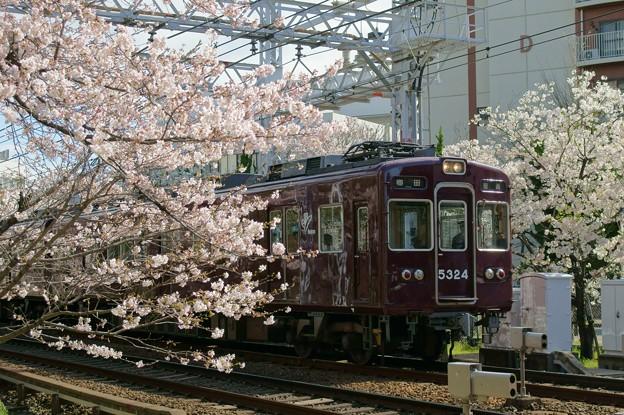 Photos: 桜と阪急電車