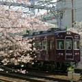 桜と阪急電車