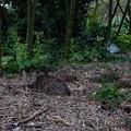 Photos: 竹やぶにねこ