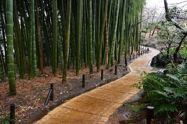 竹の小径も青々と