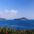 Photos: 蜜柑の島