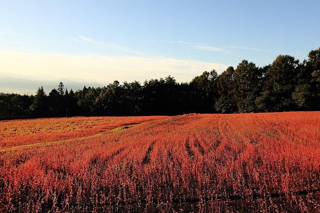 ルビー色の丘