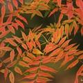 写真: 紅葉の巣