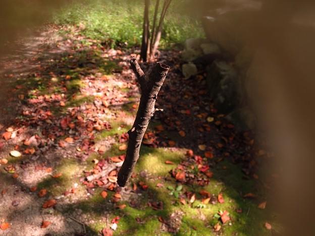 「枯れ枝の・・空中ブランコ・・」 ・・・