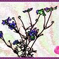 Photos: 「色鉛筆風」・・コスモス画像・・・・・・