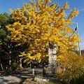 写真: 観世音寺の入り口