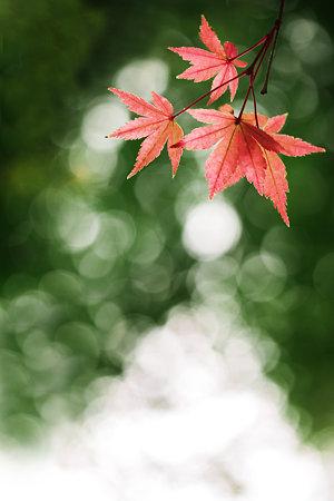 降り注ぐ秋