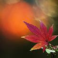 Photos: 落ち葉の季節