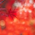 赤い色合い