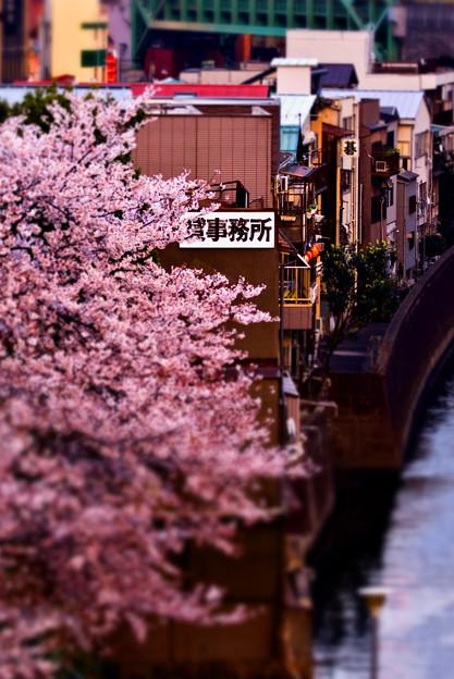 桜のある街並み