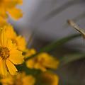 Photos: 花が呼ぶ