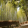 写真: 嵐山の竹林