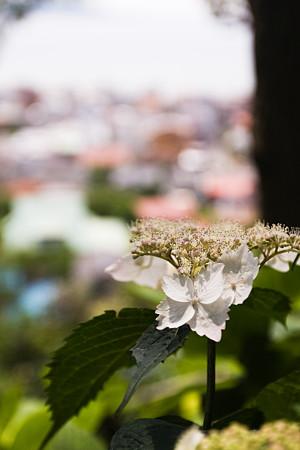 眺め良き花