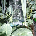 Photos: 自動水やり器設置状態