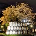 Photos: サッポロビール園の夜桜