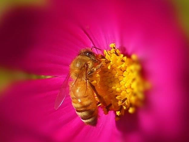(花粉)団子作りはお任せ。目がキラキラーン。