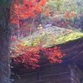 苔むす御堂の秋