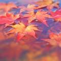 写真: 最後の紅葉 in 浄土寺山