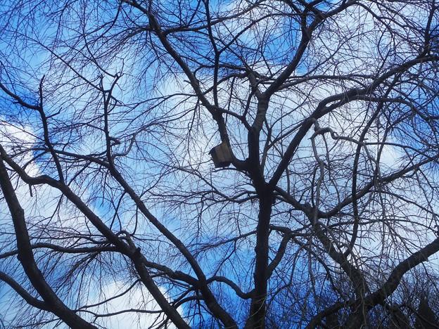 Photos: 春を待つ、丸裸の巣箱の住人は誰?