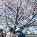 満開の 桜の下で 俳句会 in 黒崎水路
