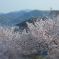 瀬戸路 しまなみ海道の春